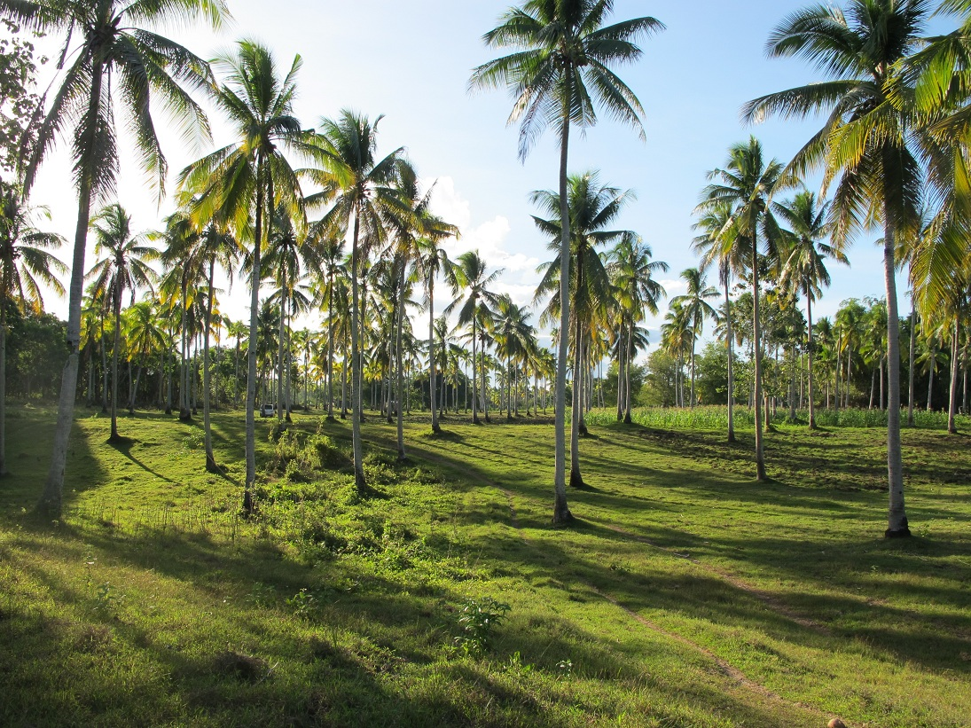 City Davao Samal Island