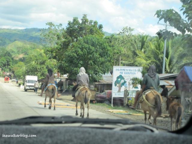 Davao - Bukidnon Roadtrip (11)