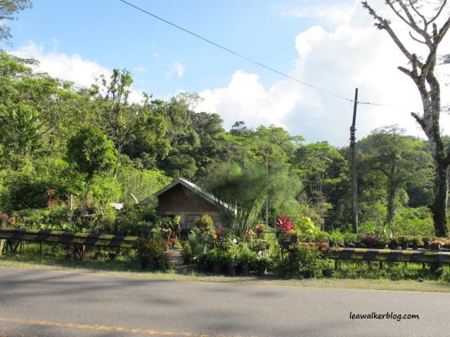 Davao - Bukidnon Roadtrip (19)