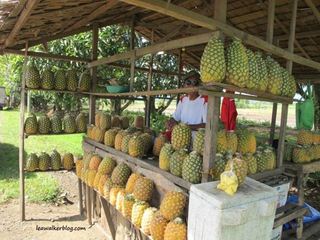 Davao - Bukidnon Roadtrip (5)