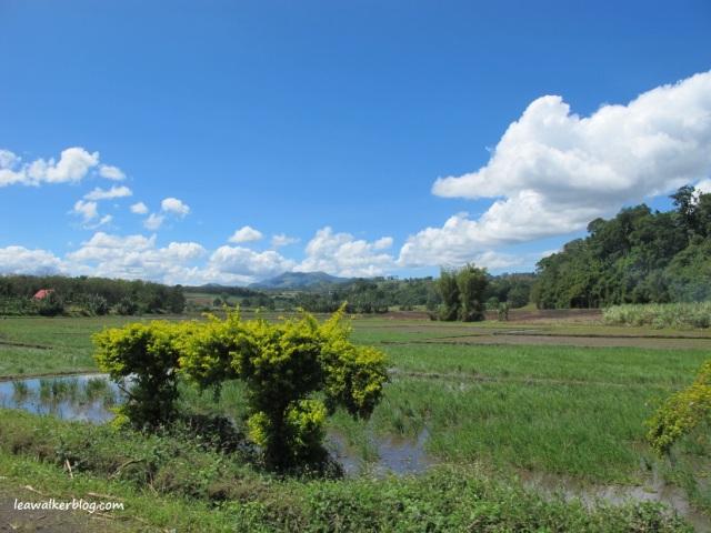 Davao - Bukidnon Roadtrip (7)