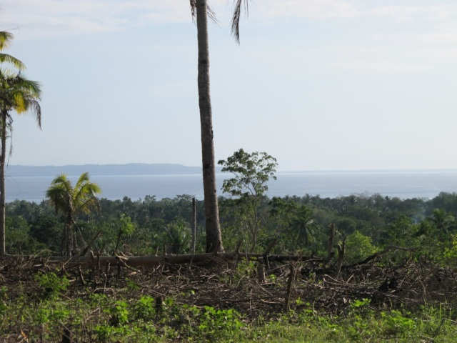 overlooking lots for sale in Samal Island (9)
