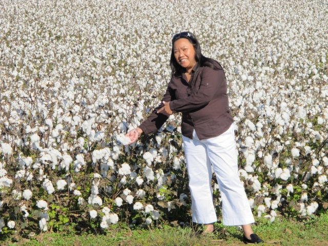 At a cotton plantation in Tennessee , USA.