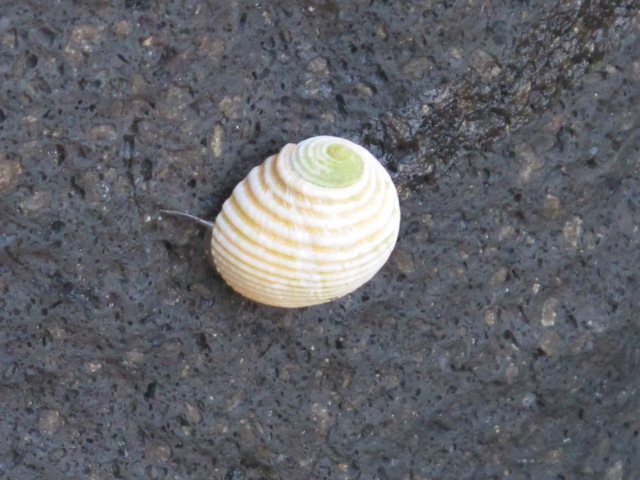 Shell on the rock.. :)