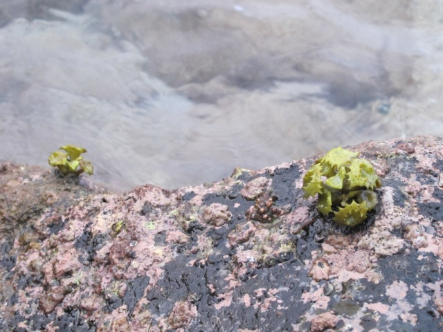 I don't know what this plant is.. It looked so cute on the rocks..