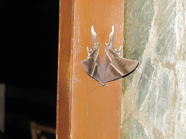 Our night time visitor. Stayed in our verandah. :)