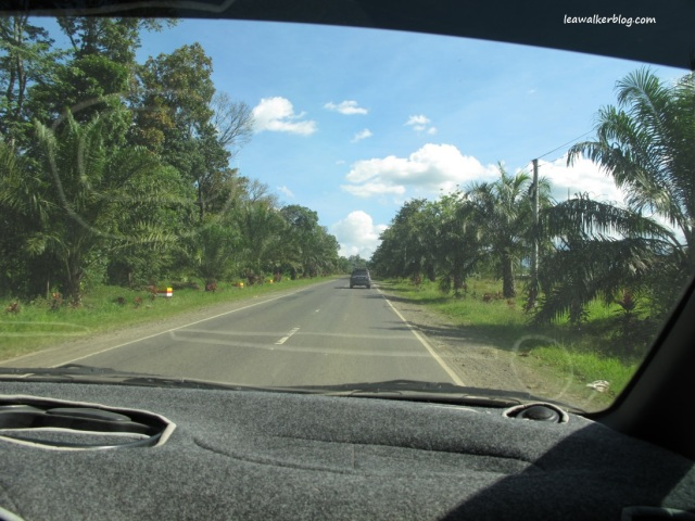 The road in Kitaotao, Bukidnon is lined up with Palm Trees.