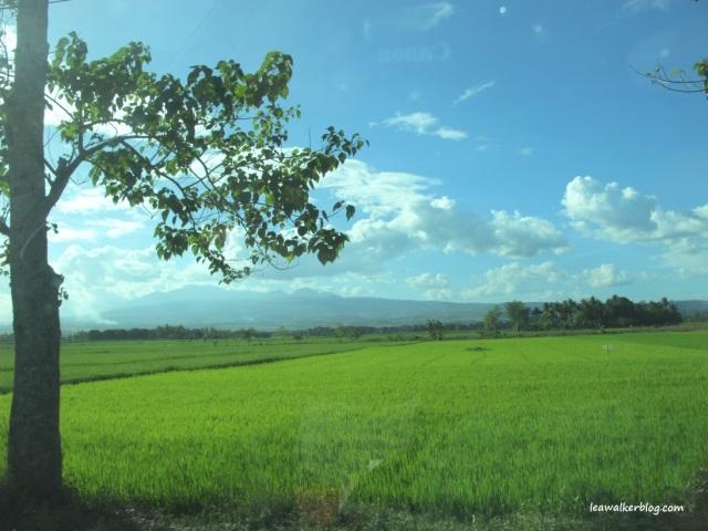 Somewhere in Valencia, Bukidnon.