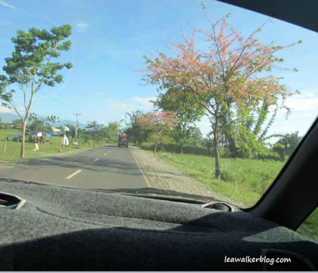 These colorful trees reminded me of Autumn in the US. In Malaybalay, Bukidnon.