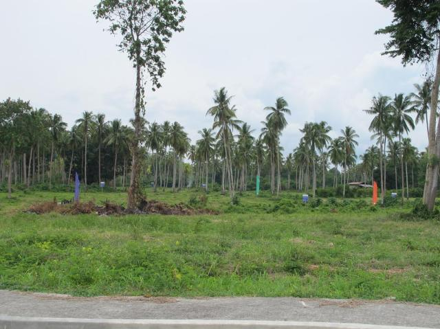 playa azalea lots for sale samal island philippines  (16)