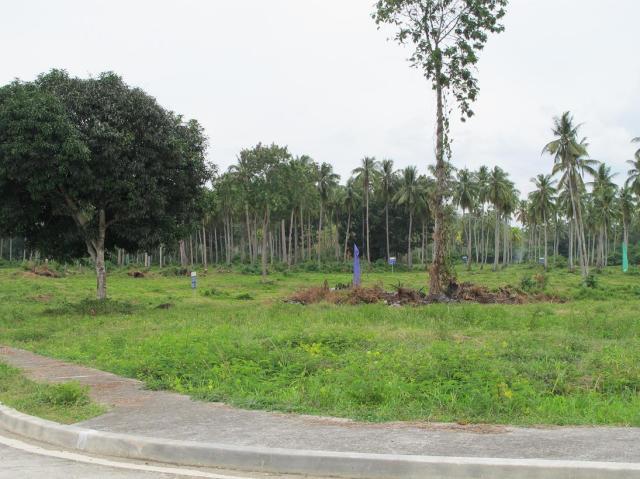 playa azalea lots for sale samal island philippines  (18)