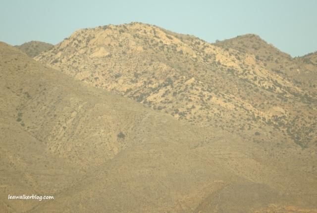 Clark Mountain.