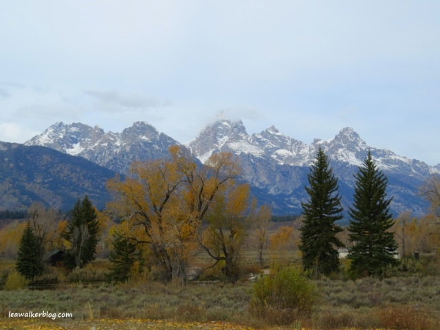 These are just some of my beautiful memories of the Grand Tetons. Taken by me on October 2013.