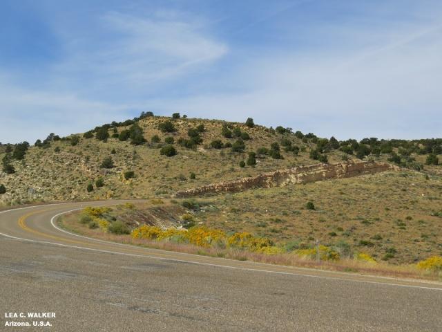 kaibab national forest, arizona, usa, us roadtrip, us 89 route