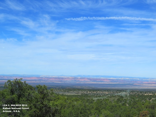 Kaibab National Forest (4)