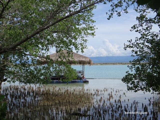 secdea mangrove walk (12)