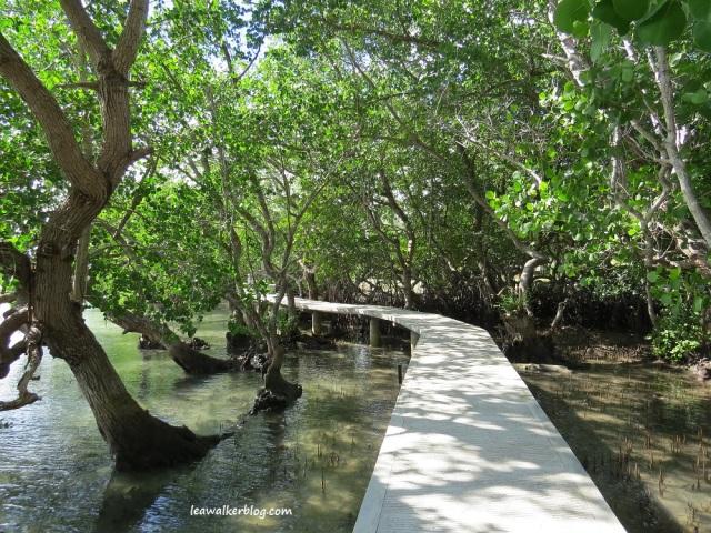 secdea mangrove walk (3)