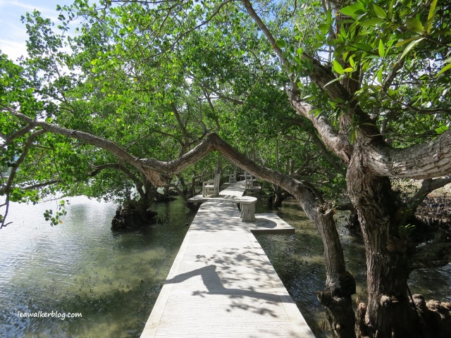 secdea mangrove walk (4)