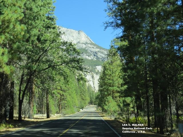 sequioa national park, king's canyon, seki national park, california, america, u.s.a.
