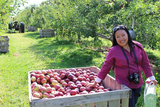 apple picking adirondacks mountains (2)
