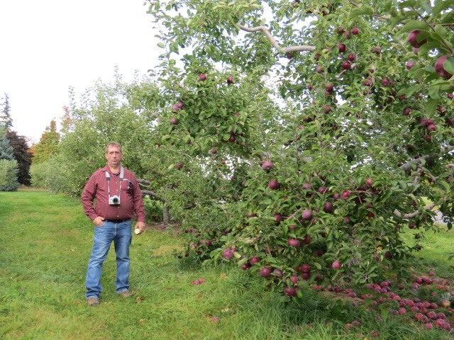 apple picking adirondacks mountains (21)