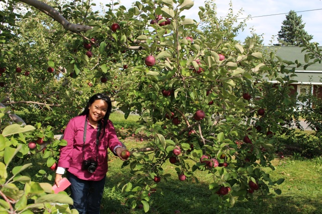 apple picking adirondacks mountains (6)