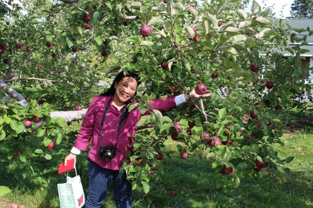 apple picking adirondacks mountains (7)