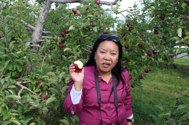 apple picking adirondacks mountains (9)