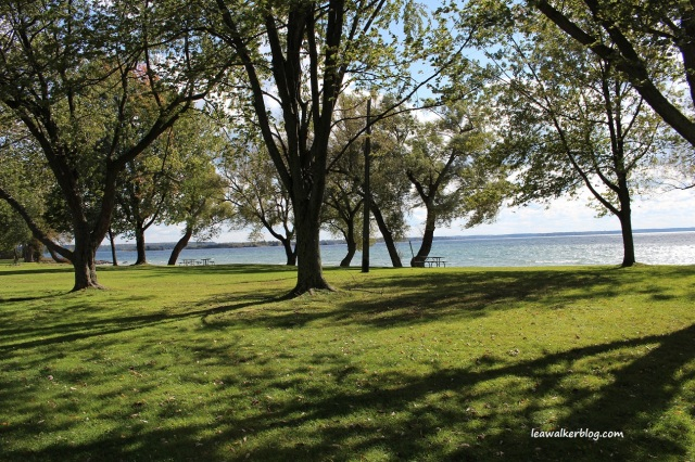 Brown's Bay Park (5)