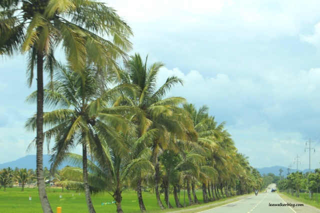 Roadtrip Day 1 - Davao to Butuan (5)